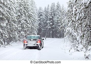 terra, norte, dirigindo, país, floresta, veículo, wintry,...