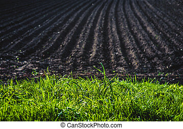 terra preta, campo arado
