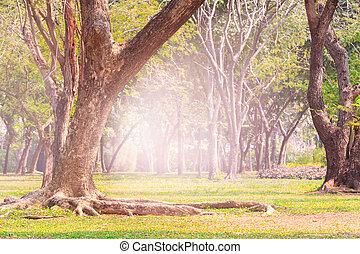 terra, scpae, de, árvore verde, em, parque público, com, chama, luz, backgro