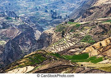 the mountain canyon