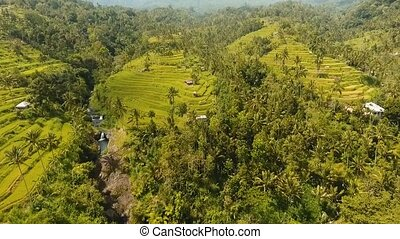 Terrace rice fields, Bali,Indonesia. - Aerial view of asian...