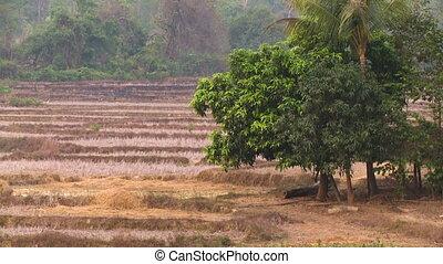 Terraced dry farmlands, forest scene, Myanmar - Wide...