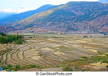 terraced, farmaland, paro, bhutan