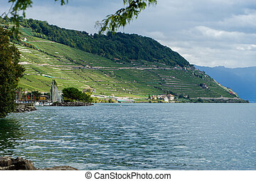 Terraced farming on the shores of Lake Geneva in Switzerland