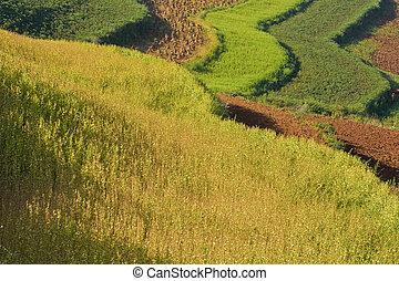 terraced fields in china (1)