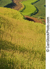 terraced fields in china (2)