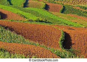 terraced fields in china