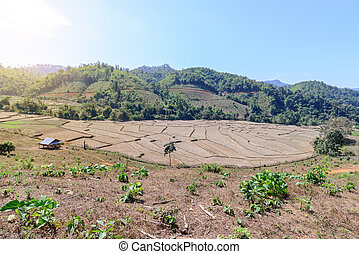 Terraced rice field after harvest with mountain background.