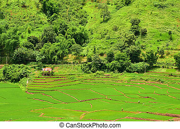 Terraced rice field in Chaloem Phra Kiat district