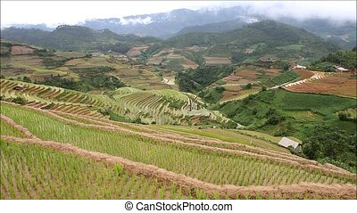 Terraced rice field in water season in Mu Cang Chai, Yen Bai...
