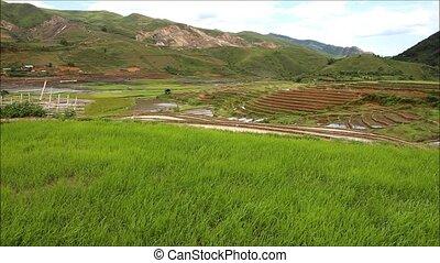 rice - Terraced rice field in water season in Mu Cang Chai,...