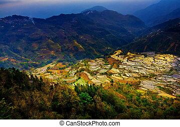 Terraced rice fields in Laohuzui Yuanyang