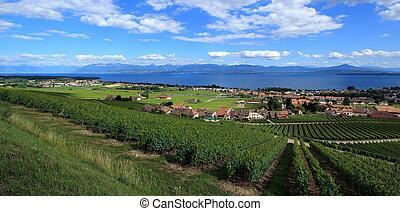 Terraced vineyards of Lavaux at Lake Geneva, Switzerland