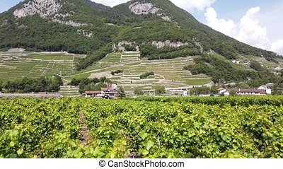 Aerial view of terraced vineyards of Aigle in Canton of Vaud, Switzerland, Europe. Spectacular scenery of rows of vines growing during the summer. Wine region with popular tasting tours.