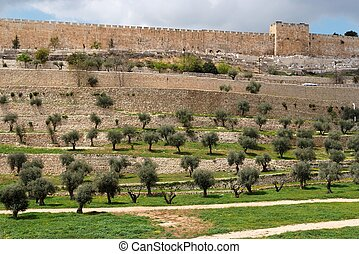Terraces of the Kidron Valley and the the wall of the Old...
