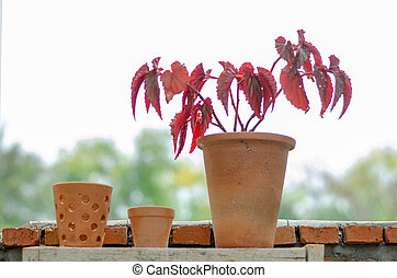 Terracotta pots for planting trees beside the wall 2