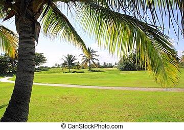 terrain de golf, exotique, palmiers, dans, mexique