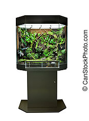 terrarium or vivarium for keeping rainforest animal such as poison frog and lizards. Glass habitat pet tank with green moss and jungle vegetation. Tropical aimal cage.