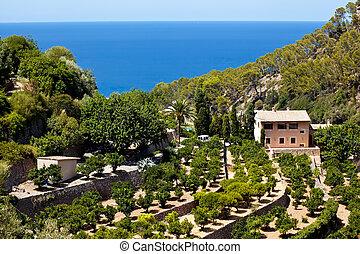 Terrases in Banyalbufar in Mallorca