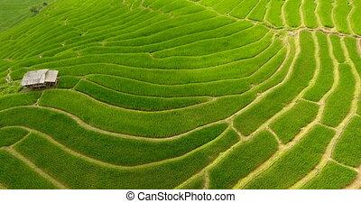 terrasse, champ, land., riz, agriculture, montagne