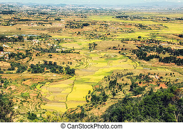 terrasse, maisons, champs, antananarivo, paddy, madagascar, ...