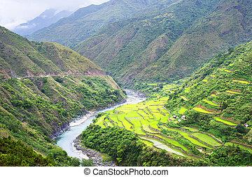 terrasse riz