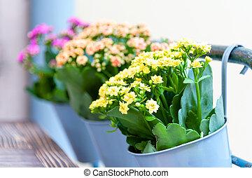 terrassera, blomningen