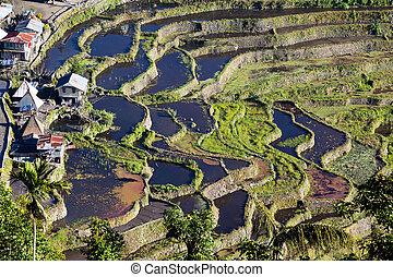 terrasses, riz, philippine.