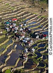 terrazzi, riso, philippine.