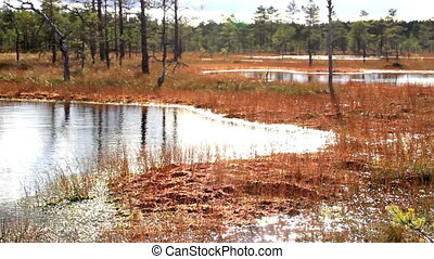 terre, aimer, eau, marais, marais, regarde, en mouvement, sien, marais