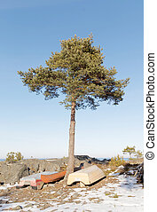 terre, arbre, pin, bas, bateaux, dessus, petit, rang