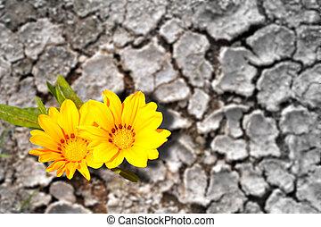 terre, aride, concept, fleurir, fleurs, persistence.