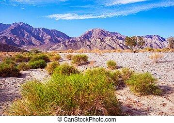 terre, california, deserto