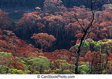 terre, feux, été, buisson, australie, brûlé, après
