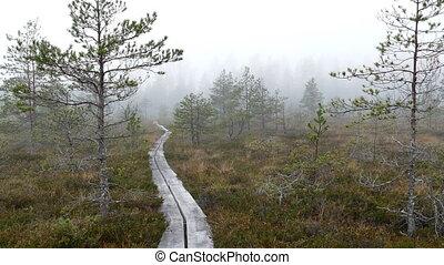 terre, randonnée, bois, piste, promenade, par, marais