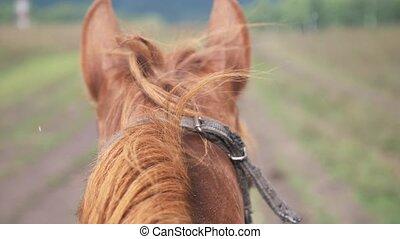 terre, sprinter, cheval, mouvement, courant, autour de, piste, lent, horse., nature., pendant, jockey, rain., rouges