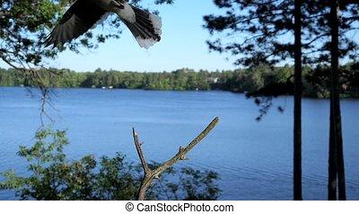 terre, sur, deux, baston, droit, branch., oiseaux