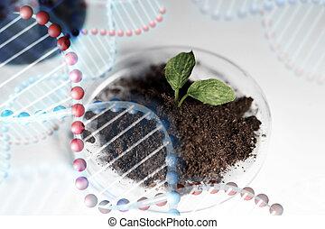 terrein, plant, op, laboratorium, afsluiten