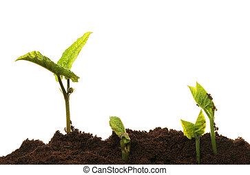 terrein, seedlings