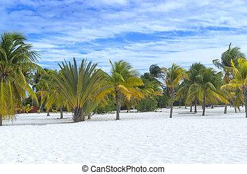 terrenal, paraíso, árboles de palma, sol, y, arena, cerca, el, mar