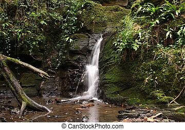 terreno boscoso, cascata