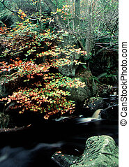 terreno boscoso, flusso