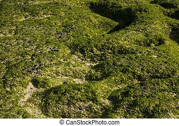 terreno, spiaggia, verde, muschio