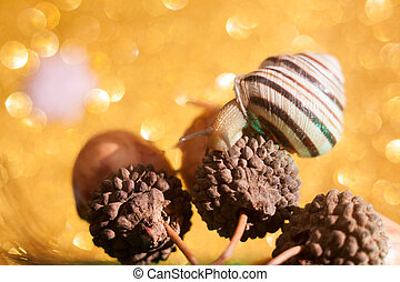 terrestre, caracol, família, helicidae., borgonha, também, romana, terra, air-breathing, hélice, molusco, pulmonate, pomatia, gastrópode