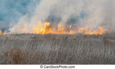 Terrible big high wildfire in the forest steppe. Dry steppe...