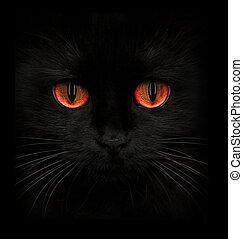 terrible, bozal, de, un, gato negro, con, ojos rojos