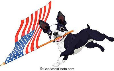 terrier boston, correndo, bandiera