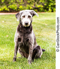Terrier Crossbreed Dog in Green Yard