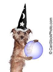 Terrier Dog Fortune Teller
