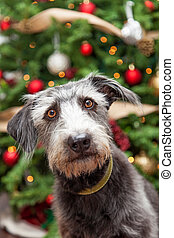 Terrier Dog Near Decorated Christmas Tree - Close-up photo...
